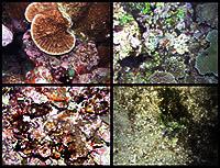 TOAD underwater iamge, American Samoa.