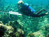Image of towed diver.