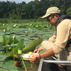 Cuong Tran (student) collecting samples at the Old Woman Creek National Estuarine Research Reserve. Photo by L. Faulstich