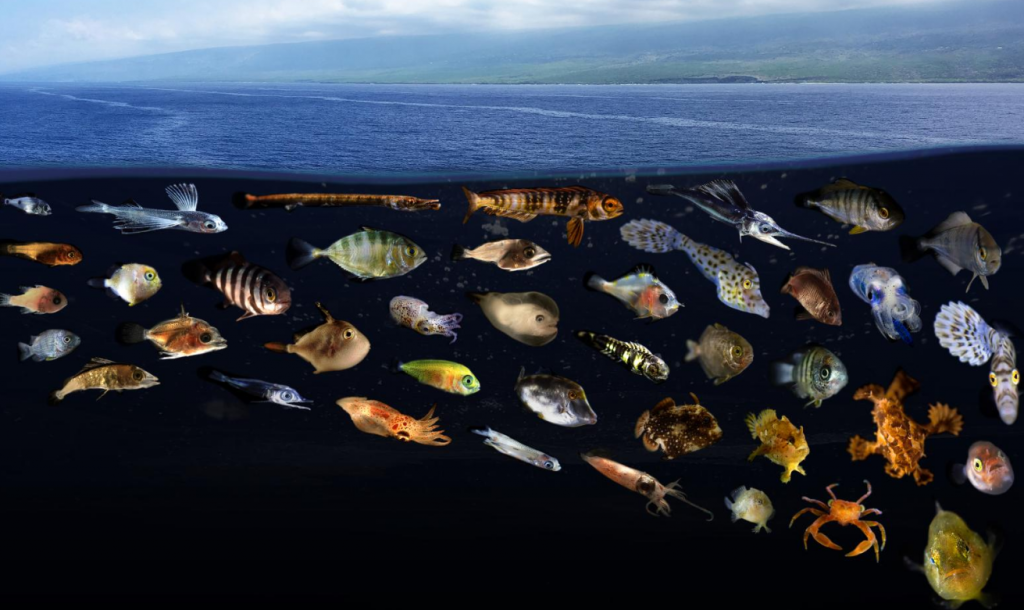 Image of many small, juvenile fish imposed under an ocean surface slick