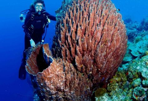 Diver posing in front of large piece of coral