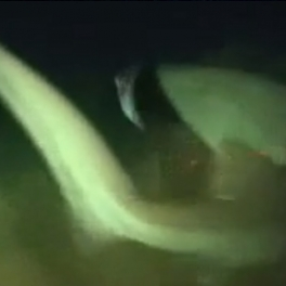 6-gill shark encounter video preview