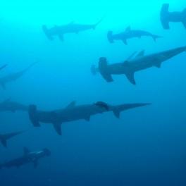 """Sharks!@#U%$^%#$%^#"" by Ryan Espanto. Licensed under CC BY 2.0."