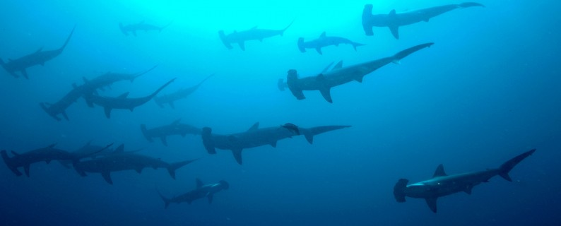 """Sharks!@#U%$^%#$%^#"" by Ryan Espanto. Licensed under CC BY 2.0."