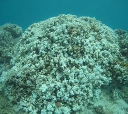 image of bleached coral