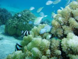 photo of a reef and fish