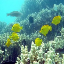 photo of tropical fish and reef""