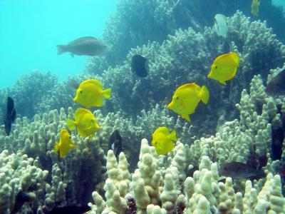 """photo of tropical fish and reef"""""""