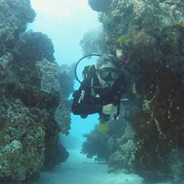 Diving in the Great Barrior Reef