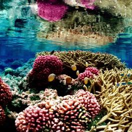 Reef_palmyra_USFWS