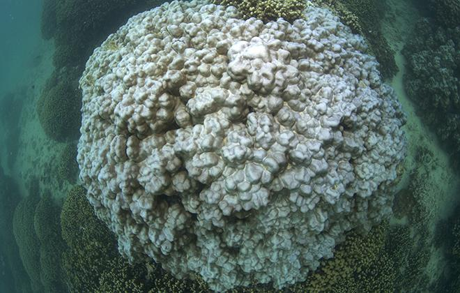 Photo of coral head