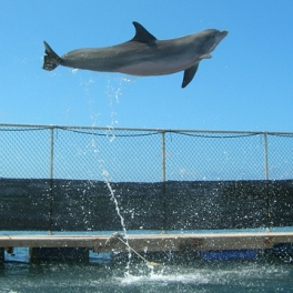 Photo of leaping dolphin