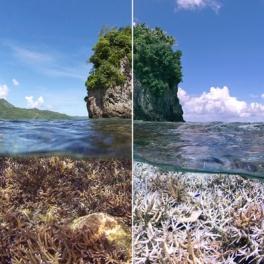 Coral bleaching comparison image