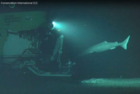 Screen capture showing the Pisces V submersible and sleeper shark