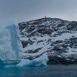Icebergs and Gentoo penguins by Useful Island. Photo by Astrid Leitner (UHM/SOEST).