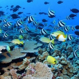 Image of fish and coral reef in PMNM