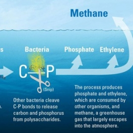 Marine methane graphic by Eric Taylor, WHOI