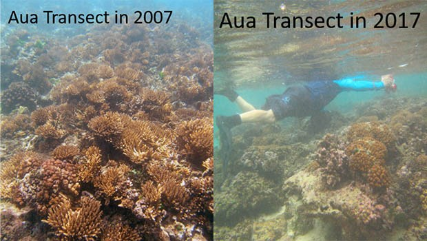 Comparison of the coral reefs during the Aua Transect 2007 and 2017