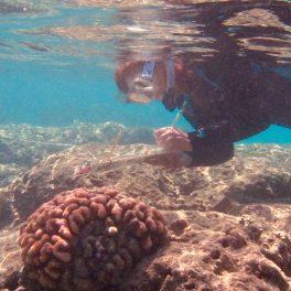 Ku'ulei Rodgers conducts a coral bleaching survey.