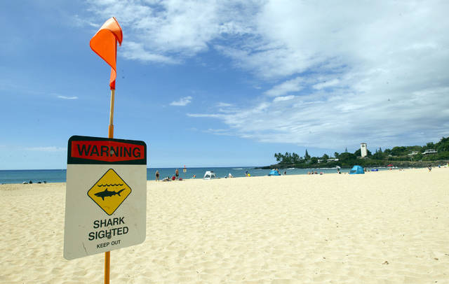 Shark warning sign on O'ahu beach