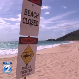 "Image of ""beach closed"" and ""shark sighted"" signs"