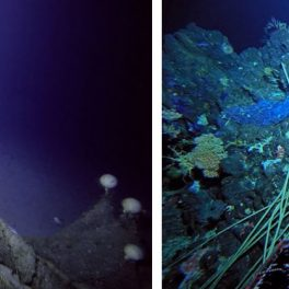 Abandoned trawl nets and lines caught in the craggy terrain of seamounts.