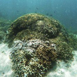 Image of bleaching coral by Caleb Jones.