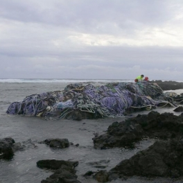 40-ton net mass that washed ashore in January at Kamilo Point in Ka'u
