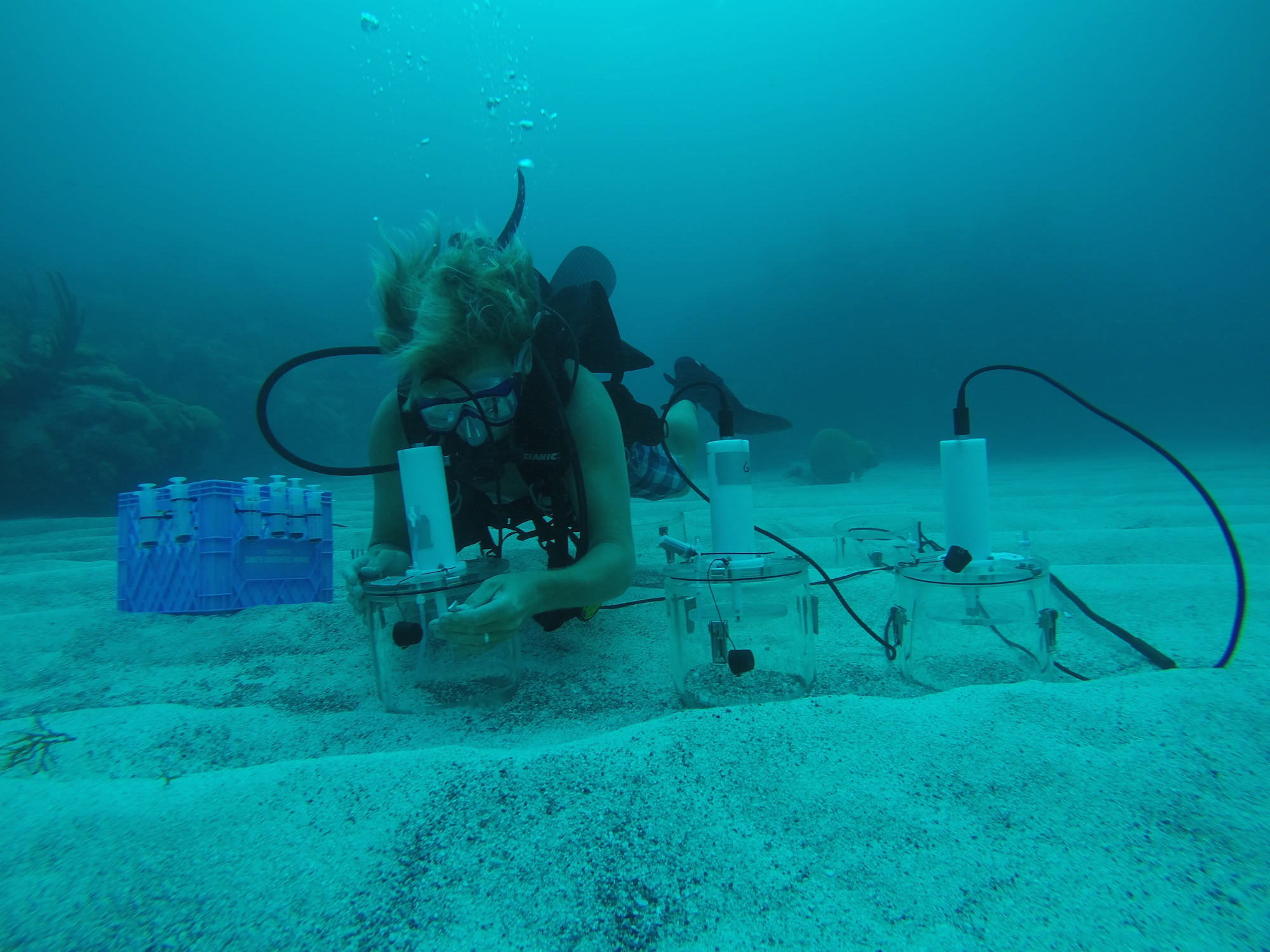 Diver using benthic chambers.
