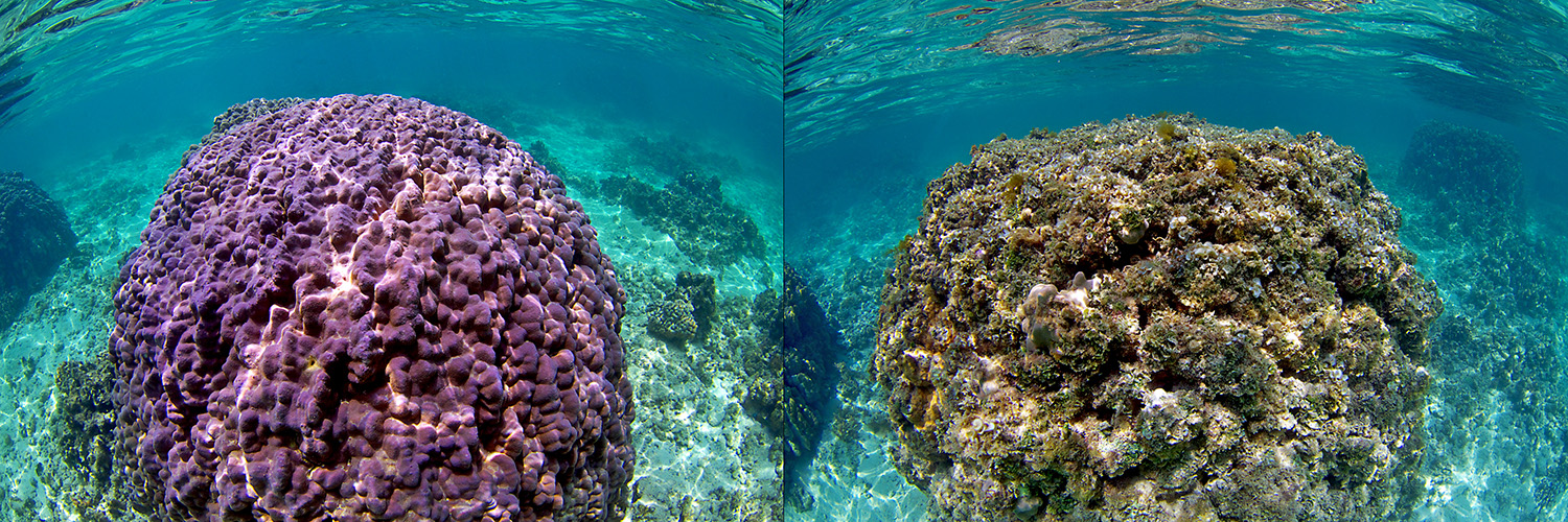 Composite showing healthy reef and degraded reef. Credit: Keoki Stender, Marine Life Photography