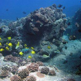 Healthy reef in Hawai'i.