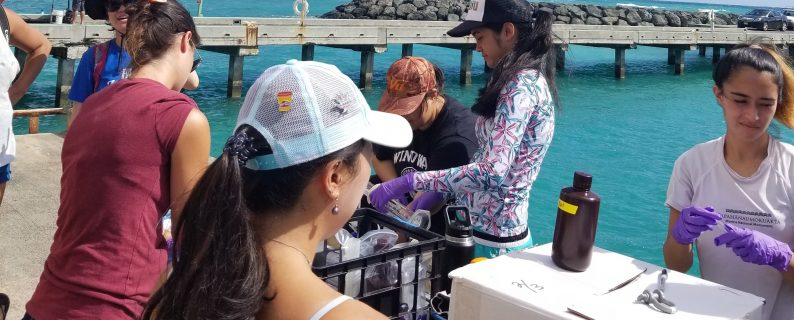 Mauka to Makai students collecting water samples at Makai Pier. Credit: Mauka to Makai students