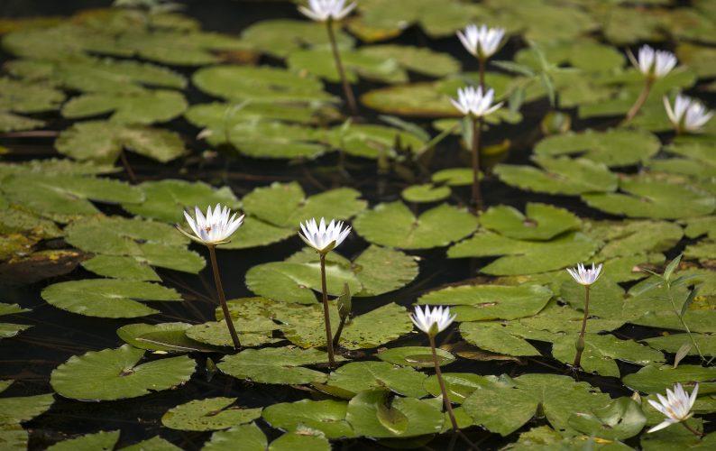 C-MAIKI Waimea Botanical Garden. Credit: UH Foundation