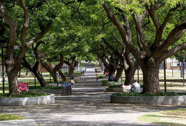 View of McCarthy Mall at the University of Hawai'i-Manoa upper campus.