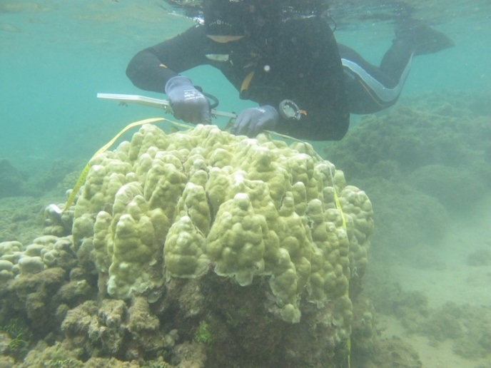 Keisha Bahr surveying a healthy coral colony. Photo credit: Ji Hoon