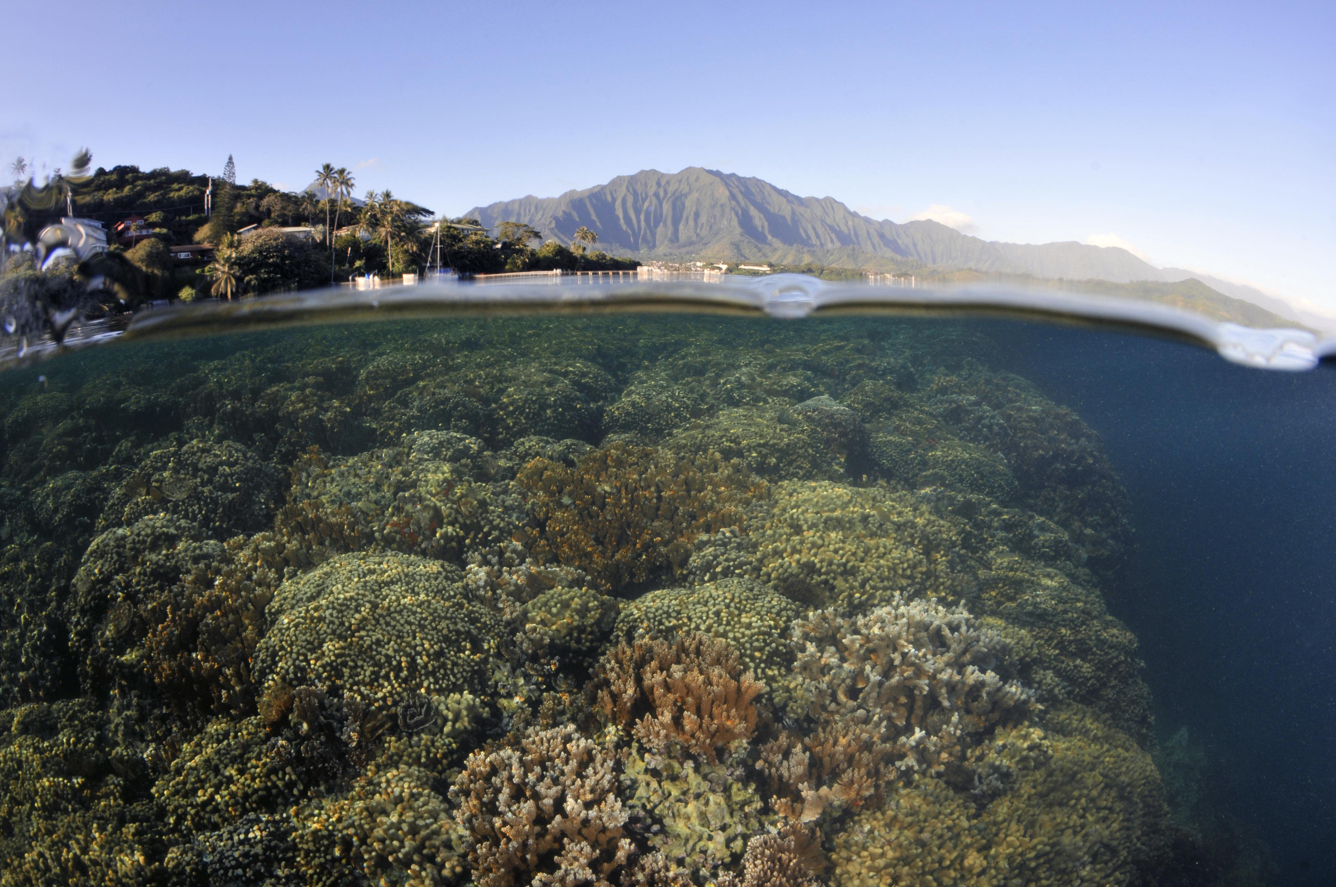 Split image of coral formations near the coast and the Koolau mountains in the background, Kaneohe Bay, Oahu, Hawaii, USA
