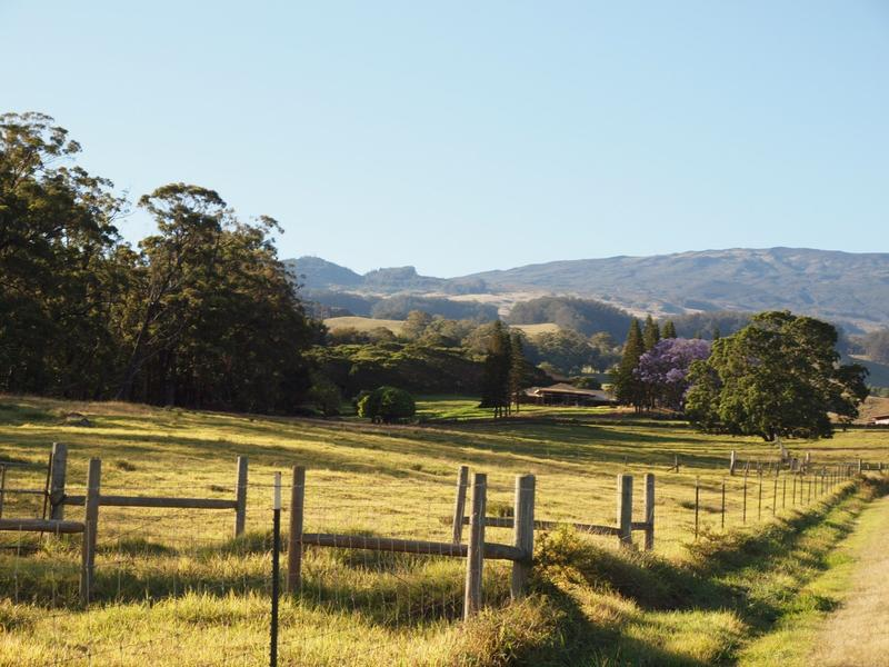 Photo of dry conditions in Upcountry Maui.