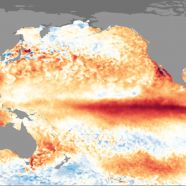 Image of sea surface temperature anomalies during the 2015-2016 El Nino event. (NOAA)