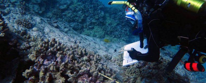 Jamie Caldwell conducting a coral health survey. Credit: UH HIMB.