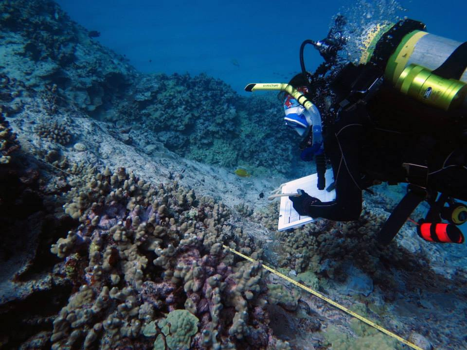Jamie Caldwell conducting a coral health survey. Credit: UH HIMB.
