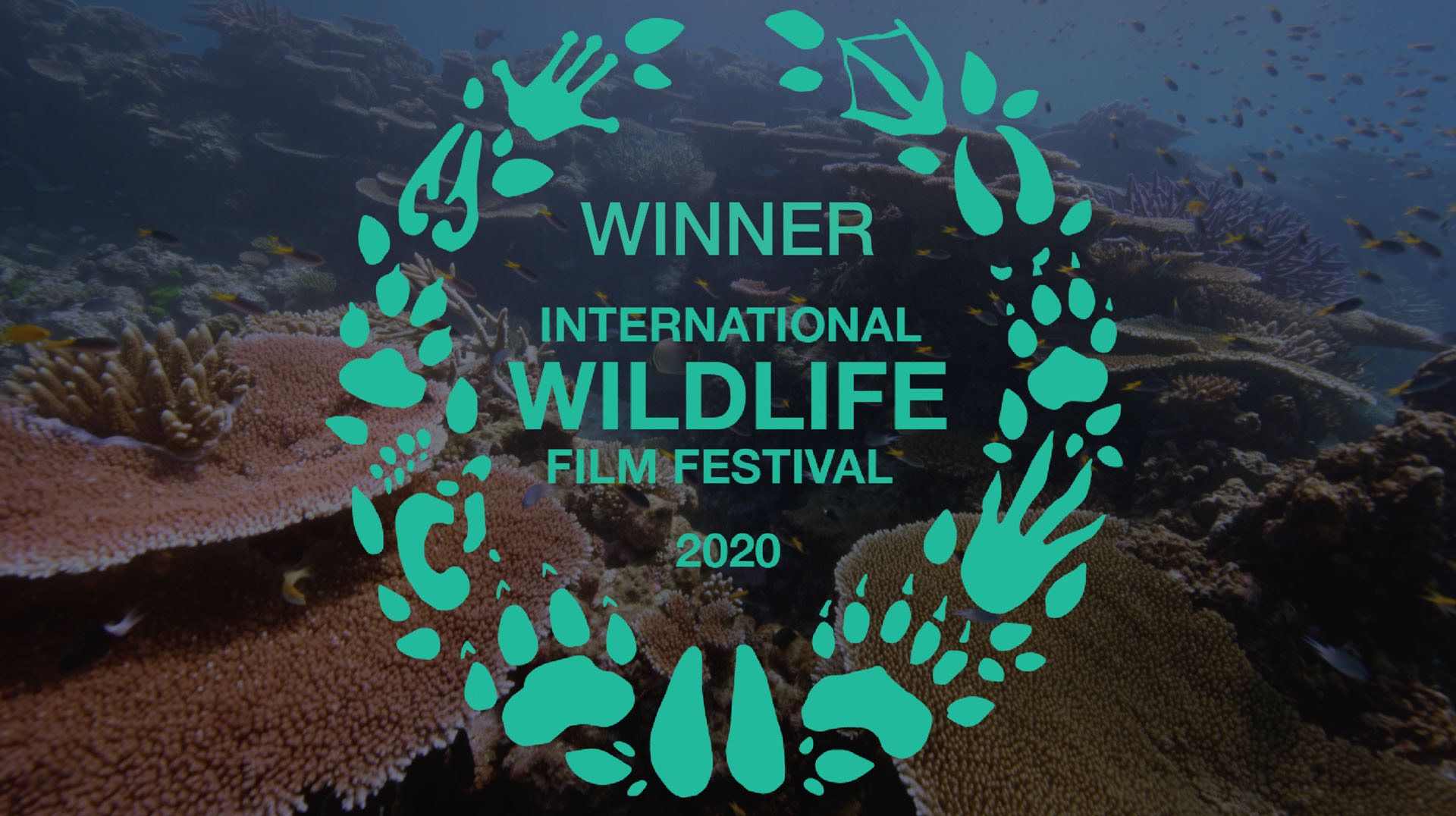 Lost Cities won at the International Wildlife Film Festival 2020.