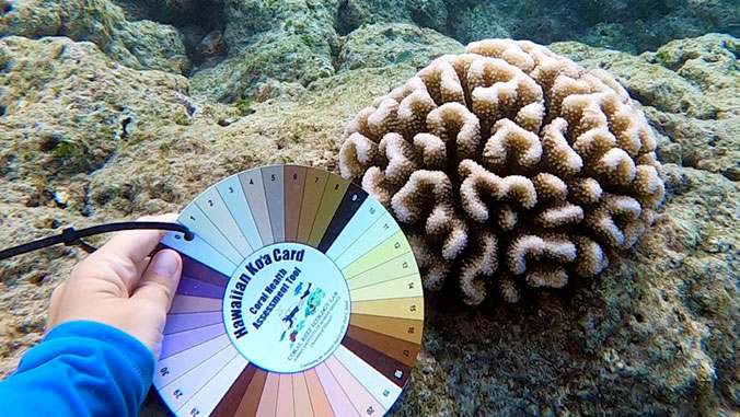 Researcher comparing coral underwater to coral card.