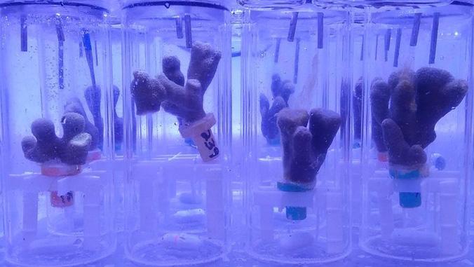 Coral samples in vials.