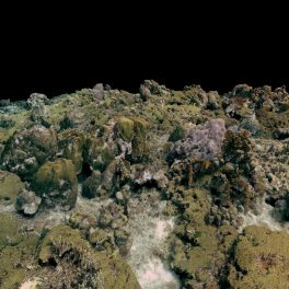 A large-scale, 3D reconstruction of a coral reef using structure from motion (SfM) photogrammetry.