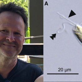 Michael Rappé (L); An alga from the novel phytoplankton class, Rappephyceae (R).
