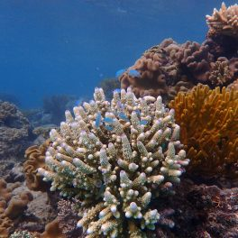 Fish on a coral reef.