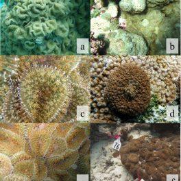 Images of corallimorphs around Palmyra Atoll.
