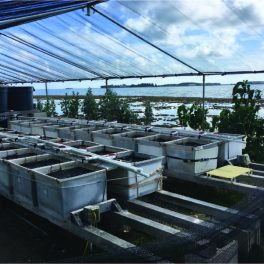 Experimental set-up of mesocosms at the Hawaii Institute of Marine Biology.